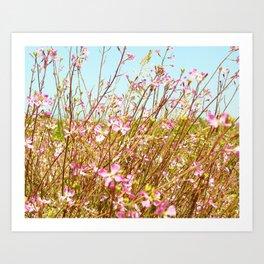 Fort Brag Flowers I Art Print