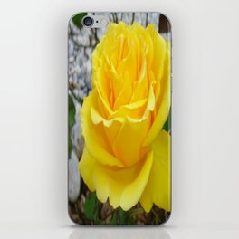 Beautiful Yellow Rose with Natural Garden Background iPhone Skin