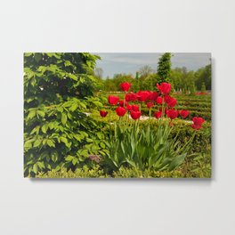 elm and red tulips arranged Metal Print