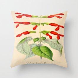 Salvia gesneriflora Vintage Botanical Floral Flower Plant Scientific Illustration Throw Pillow