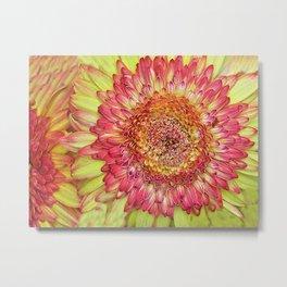 Flower yallow pink Metal Print
