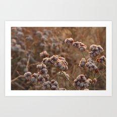 Plants 1 Art Print