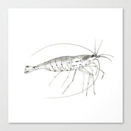 Amano Shrimp Canvas Print