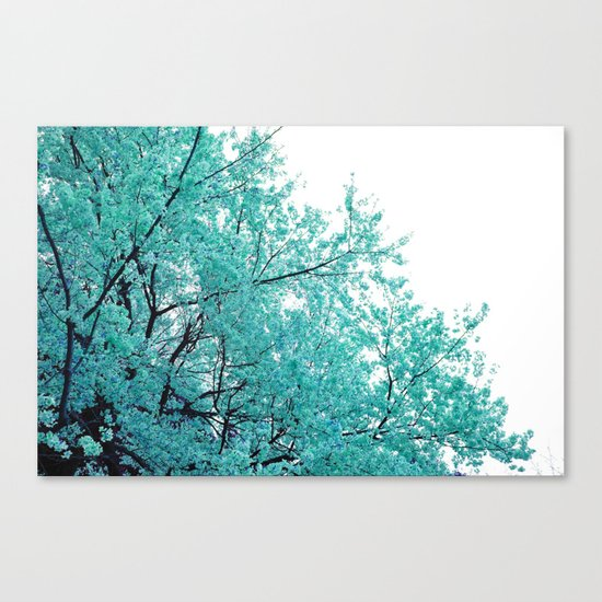Turquoise Cherry Blossoms Canvas Print