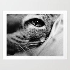uschi the cat Art Print