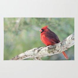 Serene Cardinal Rug