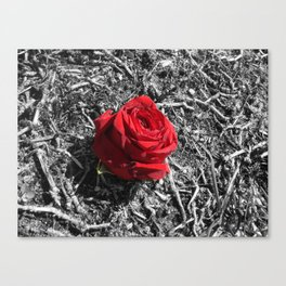 in a world of gray Canvas Print