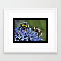 bees Framed Art Prints featuring Bees by Doug McRae