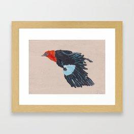 Blackbird in the sky Framed Art Print