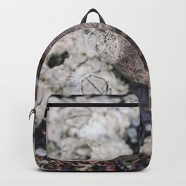 Periwinkles and Barnacles on a rock Backpack