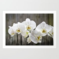 Pure Orchid Art Print