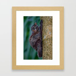 Malayan Flying Lemur Framed Art Print
