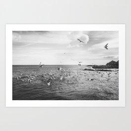Irish bay and flying seagulls Art Print