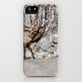 Wapiti Bugling (Bull Elk) iPhone Case