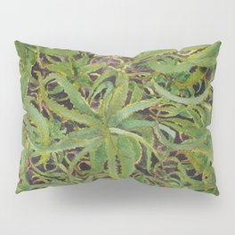 Aloe Darlin' Pillow Sham