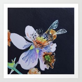 Blackberry Blossom; Marymoor Park Art Print