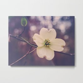 Dogwood Blossom in Color Metal Print