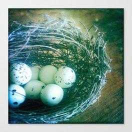 Eggs in Bird Nest Canvas Print