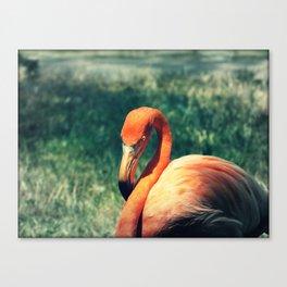 Flo the Flamingo Canvas Print