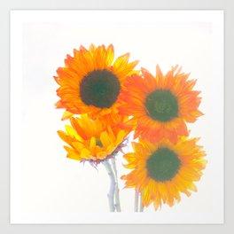 Sunflowers On White Art Print