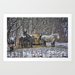 Feeding in The Snow Art Print