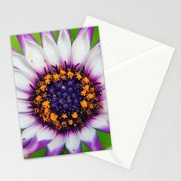 OSTEOSPERMUM 'Margarita White Spoon' Stationery Cards