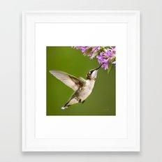 Hummingbird Flying Framed Art Print