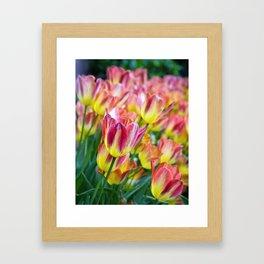 The Last Hurrah of Spring Framed Art Print