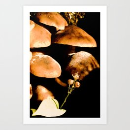 Mushrooms and Clintonia in the northern boreal forest Art Print