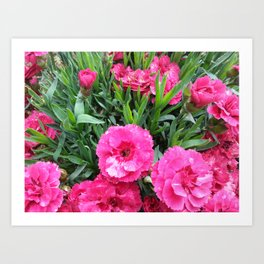 Pink cloves Art Print