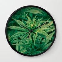 marijuana Wall Clocks featuring Marijuana Plants  by Limitless Design