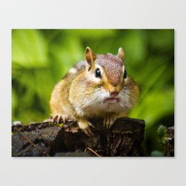 Caught With His Mouth Full Canvas Print