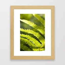 part of the broad fern leaf Framed Art Print