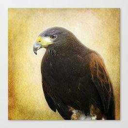 A Harris Hawk Canvas Print