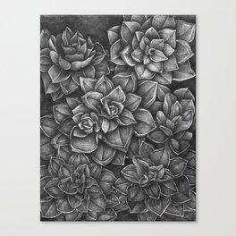 Echeveria Rosea-Crassulaceae Canvas Print