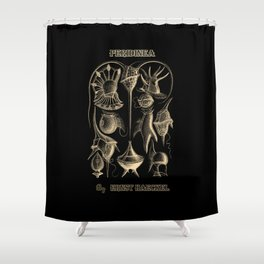"""""""Peridinea"""" from """"Art Forms of Nature"""" by Ernst Haeckel Shower Curtain"""