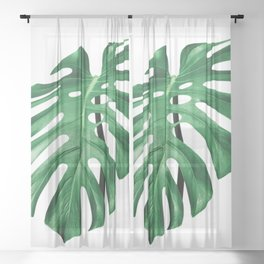 Split leaf philodendron leaf isolated on white Sheer Curtain