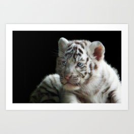 White Tiger Cub Art Print