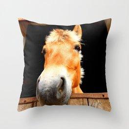 Horse Face Close Up Accentuating his Nose Throw Pillow