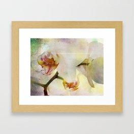 White Phalaenopsis Orchid Framed Art Print