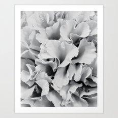 ruffles Art Print