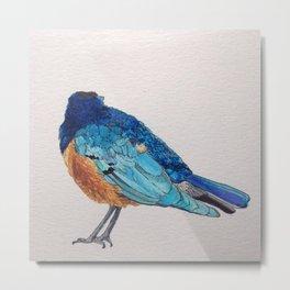 Birds: Starling Series | Superb Starling Metal Print
