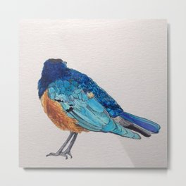 Birds: Starling Series   Superb Starling Metal Print