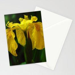 I know how the Iris Felt Stationery Cards