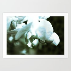 mossy orchid Art Print