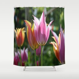Field of Tulips by Mandy Ramsey, Haines, Alaska Shower Curtain