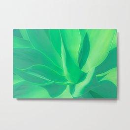 Aloe Vera Plant Metal Print