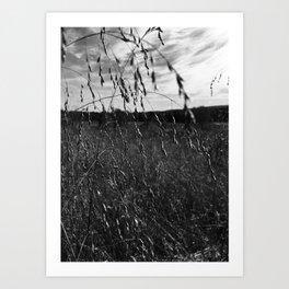 Cottonfield Number 1 Art Print