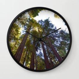 California Redwood Trees Wall Clock