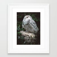 hedwig Framed Art Prints featuring hedwig by Leanne Taylor Collection